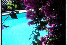 Garden / Hotel Florenz: Flowers.