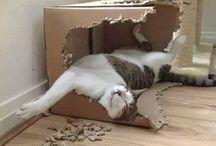 Eu durmo onde eu quiser