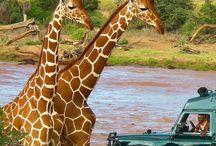 × next stop: Kenya