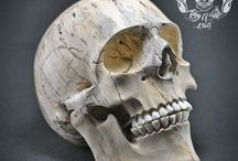 Hand Carved Realistic Human Skull from Tamarind Wood THB05 / Find this skull on Etsy !!