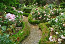 jardin-garden