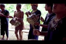 Guayusa Videos / Interesting videos we have seen about guayusa