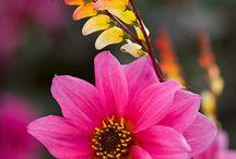 la fleur / by Sarah B.