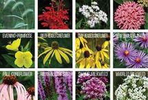 Flowers Ontario