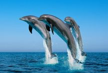 Dolphins / by Allison Perch
