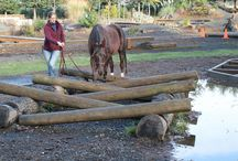 Paddock Paradise / Ideas for the paddock paradise of our horses