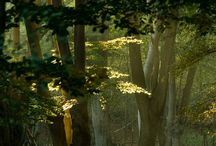 дърво(dŭrvo)
