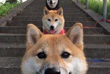 Inspiratie hondenfotigrafie