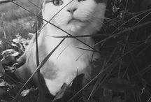 PORTFOLIO: ANIMALS / Taken by me