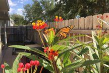 Monarchs at Easy Space Saving Garden