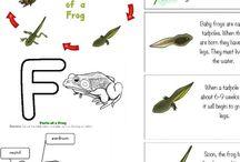 Frogs / Preschool