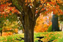 fondos pantalla otoño