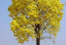 """Árvores / """"Que nosso exército sejam as árvores, as rochas e os pássaros do céu"""" (Alexandre o Grande)"""