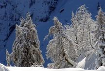 Winter / by Tomaž Kozamernik