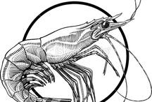 magic shrimp