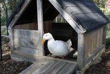 duck <3