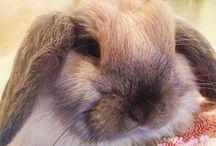 Hazel Grace / Bunny