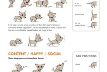 Know Your Dog / Know what your dog is saying.  Learn dog body language.