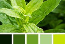 colour pallete