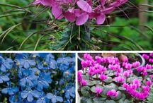 Blomster i skygge