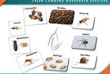 شركات مكافحة الحشرات / مكافحة الحشرات ورش المبيدات من الأمور الهامة جداً في مجتمعنا ولا يستطيع الفرد العيش بدون هذا المجال الذي تقدمه شركات مكافحة الحشرات لآن بإهمالنا لهذه الخدمه ستنتشر الأمراض والأوبئة لذلك وجب علينا شركة تيجان كباقي الشركات تقديم مكافحة الحشرات بكل همة وأمانة للقضاء على الحشرات من مجتمعنا مستخدمين أفضل المبيدات الفعالة للتخلص من هذه الحشرات