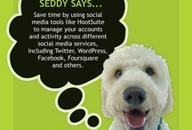 Seddy Says  / Our favorite office dog, Seddy has picked up a thing or two around the office. Follow his social media marketing tips and strategies on our Seddy Says board!