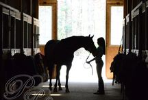Equestrian Photography / For Horse Lovers!