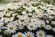 JARDIN.  / Flores, plantas, macetas... cosas lindas.