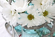 Daisies-my favorite! / by Tammy Barnes