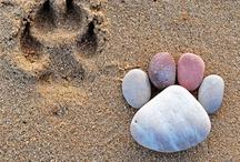 Beach !!! / by Gretchen Osborn