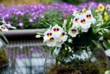 Flower & Garden / by Chihiro