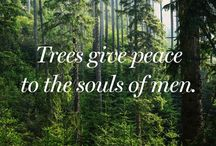 If TREES could talk / Nature talks to those who listen