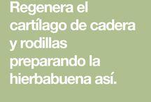 cartilago