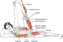 Yoga anatomía