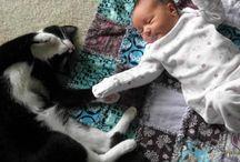 cats / cats, kittens, psorogata
