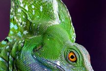 Reptilia Herpetology