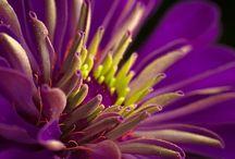 Purple Passion / All things purple. / by Gail Joy Hutchison