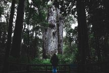 """""""Te Matua Ngahere"""". The second largest tree in the southern part of the earth. The feeling standing in front of this monster is outstanding!"""