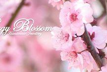 Peggy Blossom