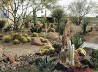 desert gardens ideas.... / by Tania Jones