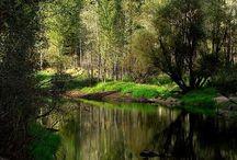 Příroda / Nature