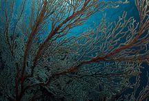 Indonesia sea