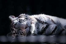 Sleeping Animals / by Toshihiro Nakajima