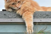 Le chat / Très belle photos