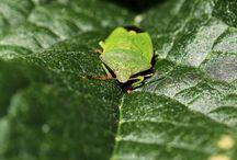 Beautiful Bugs / I love the colours!