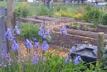 Gardening:  community & otherwise