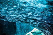 Podwodny świattt