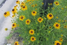 Our Flowers / Perennials we planted around our house. / by Maryann Vallone