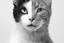 Cats / by Miriam Miras