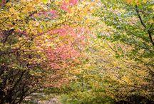 Autumn colours / Kiama abbey